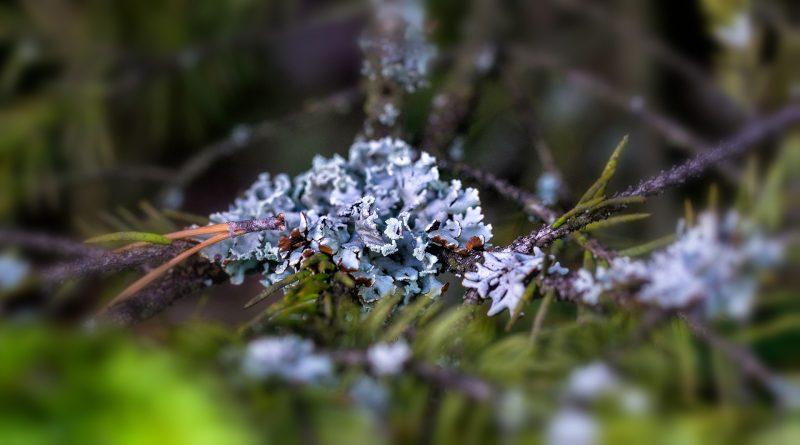 blachownia, przyroda blachowni