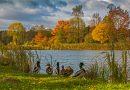 blachownia, jesień w blachowni