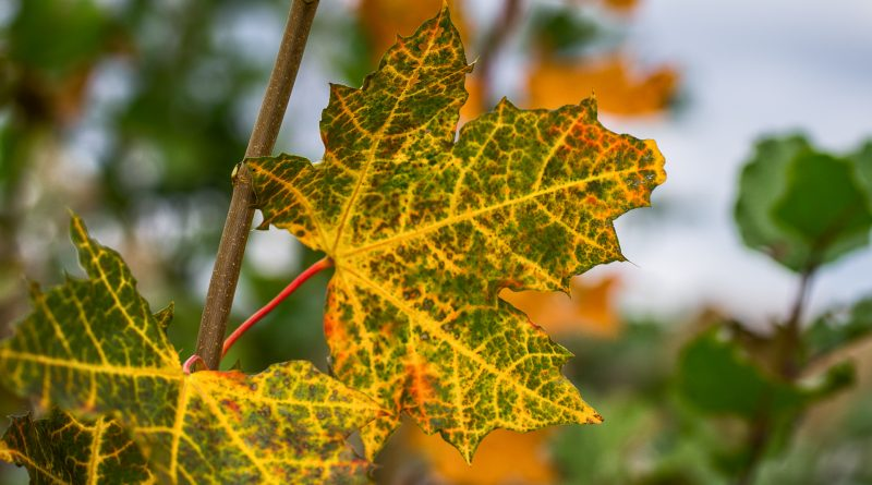 blachownia, jesień wblachowni, złota polska jesień