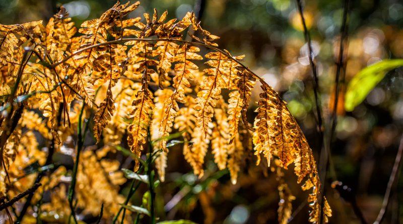 blachownia, jesień w blachowni, jesień w lesie