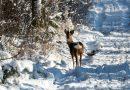 blachownia, zima w blachowni, zimowy spacer