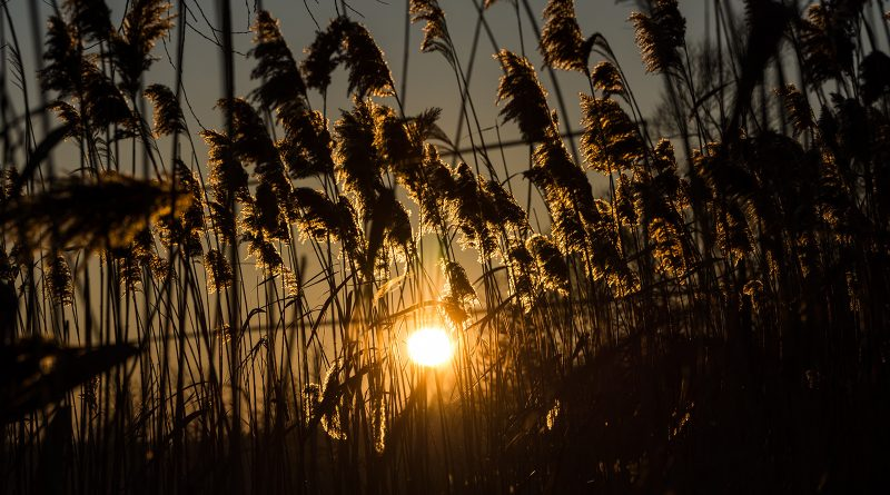 blachownia, zachód słońca