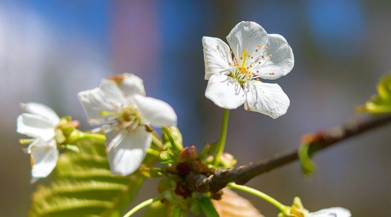 blachownia, wiosna wblachowni