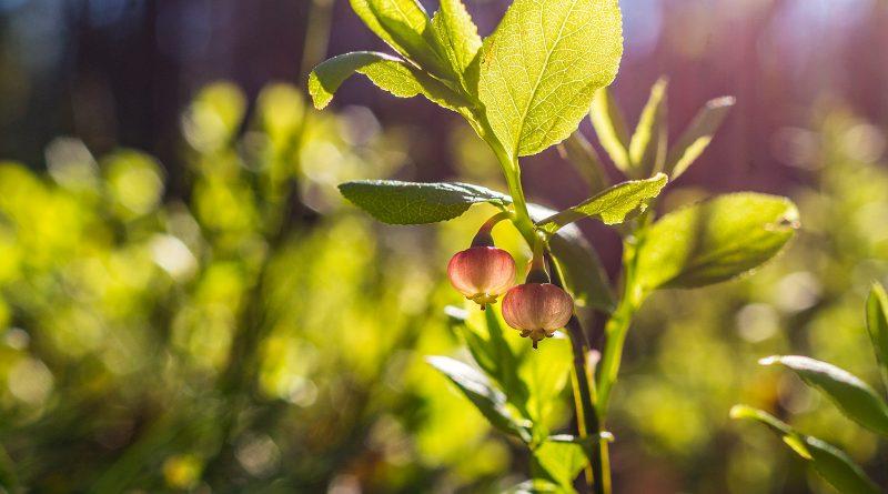 blachownia, wiosna w blachowni