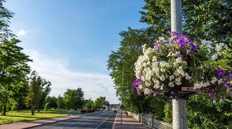 blachownia, kwiatki z blachowni